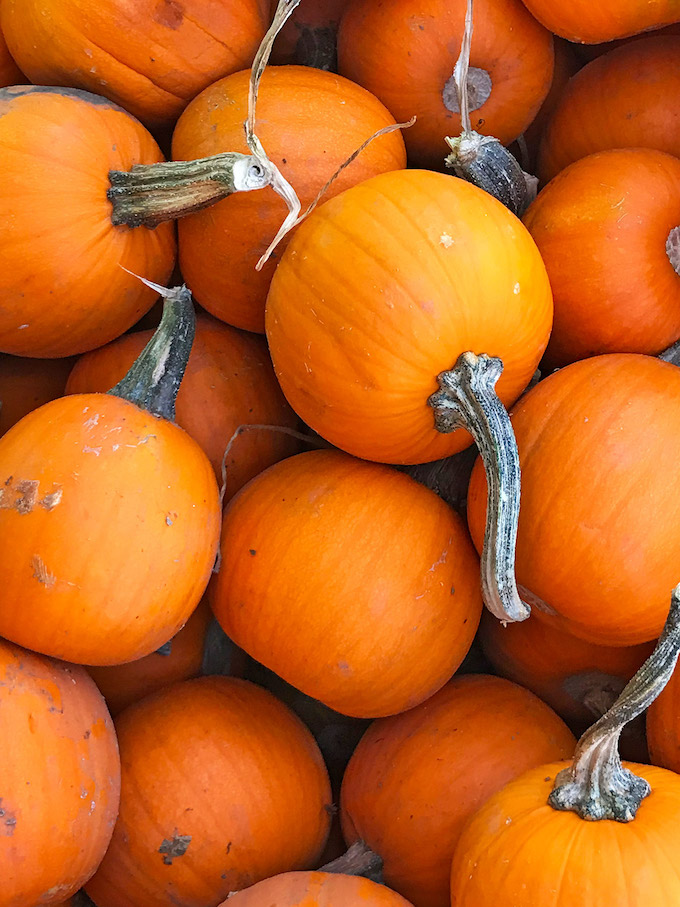 Five Fact Friday - Pumpkin Patching and fall adventures.