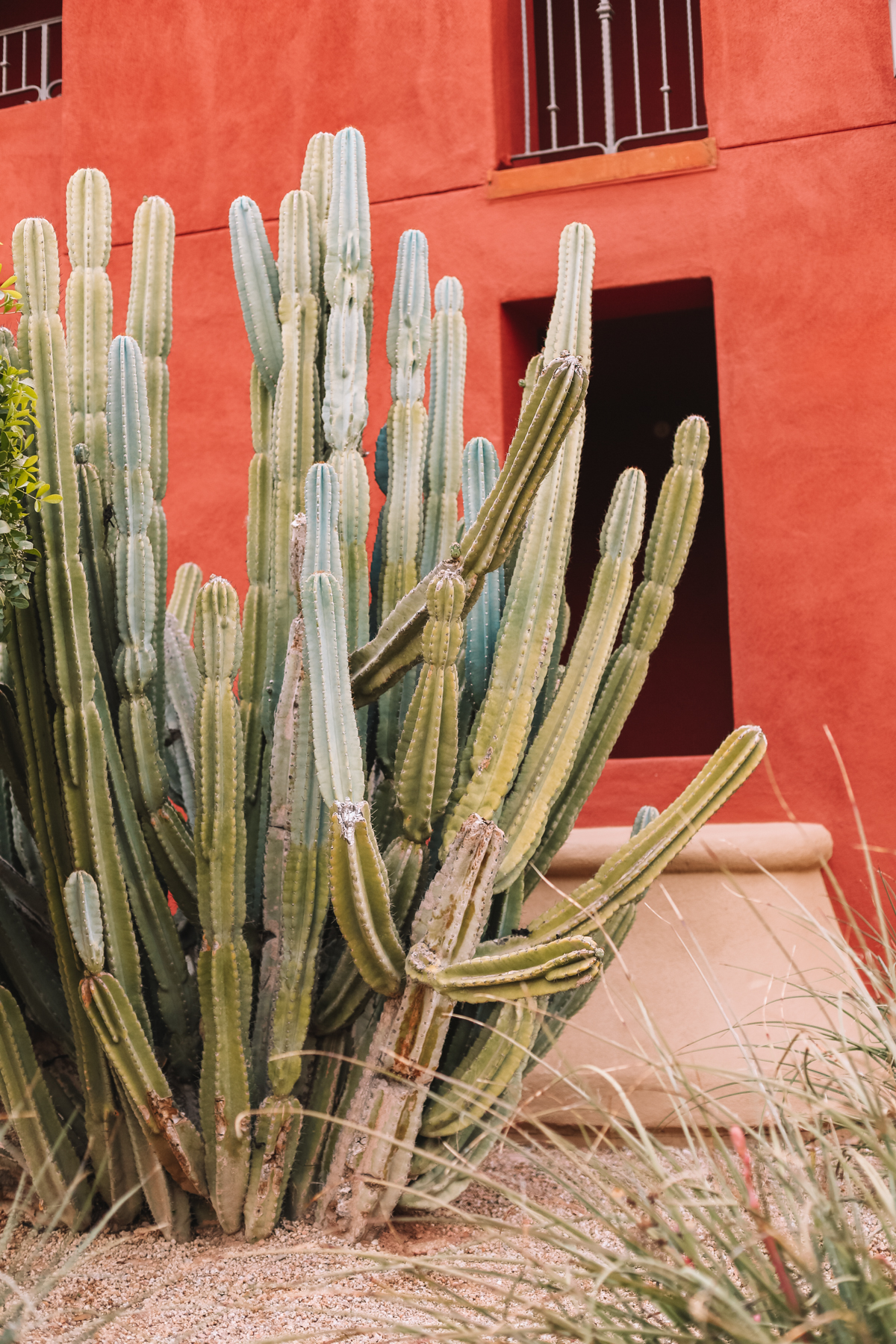 Cactus growing outside the Omni Montelucia Hotel